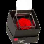 home_8x8_red_box_flowercube_home
